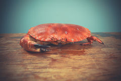 Red crab on wooden surface Royalty Free Stock Images