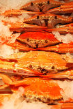 Red crabs. Fresh crabs on ice in a fresh fish shop Stock Photography