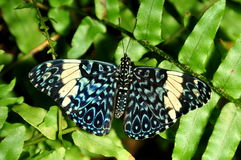 Red Cracker Butterfly Stock Photo