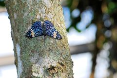 Red Cracker butterfly on tree Royalty Free Stock Photo