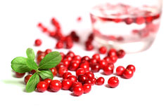 Red cranberries. Royalty Free Stock Image