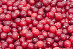 Red cranberries Royalty Free Stock Photo