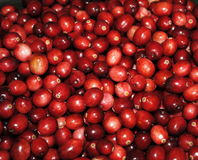 Red Cranberries Stock Photography