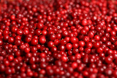 Red cranberries background. Royalty Free Stock Image