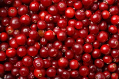 Red cranberries background. Macro of red ripe cranberries royalty free stock photography
