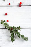 Red cranberries with a branch on the boards Stock Photo