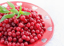 Red cranberries on plate Stock Photography