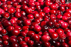 Red cranberries in sauce pot Royalty Free Stock Photography
