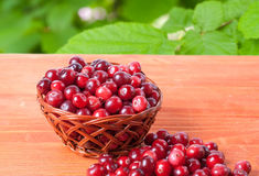 Red cranberries in a small basket on the forest background. Basket with cranberries on a wooden background with the image of green foliage in the background royalty free stock photography