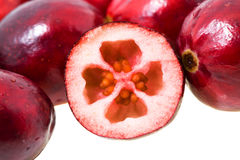 Red cranberry Stock Image