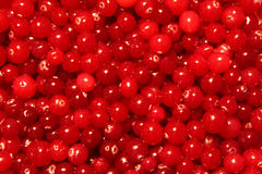 Red Cranberry Texture Royalty Free Stock Photo