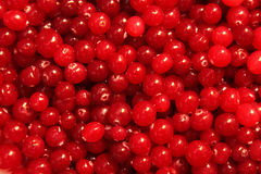 Red Cranberry Texture Stock Image