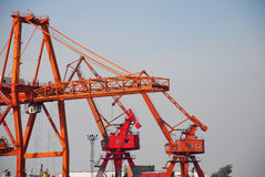 Red crane Stock Images