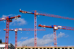 Red cranes Stock Images