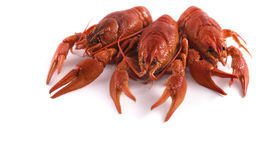 Free Red Craw Fish Isolate Profile Royalty Free Stock Photos - 40751068
