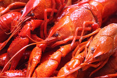 Red crawfish Stock Photography