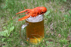 Red crawfish. With beer on green grass Stock Images