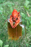 Red crawfish and beer Royalty Free Stock Images