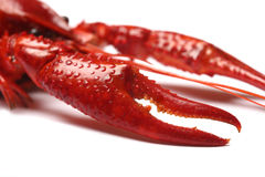 Red crawfish on white backgrou Royalty Free Stock Photos