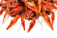 Red  crawfish on a white background. Appetizing red boiled crawfish on a white background Stock Photography