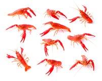 Red crawfish on white background Royalty Free Stock Photos