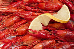 Red crayfish Stock Images