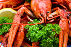Red crayfish Royalty Free Stock Image