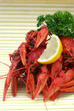 Red crayfish Stock Photography