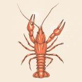 Red crayfish Royalty Free Stock Image