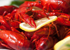 A red crayfish with lemon. A red crayfish with yellow lemon royalty free stock photography