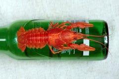 Red crayfish macro Stock Images
