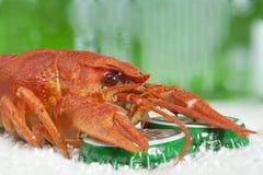 Red crayfish macro Royalty Free Stock Photography