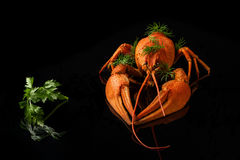 Red crayfish with parsley and fennel on a black background  reflection Royalty Free Stock Photos