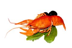 Red crayfish with salad and olives. On white background royalty free stock photos