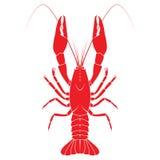 Red crayfish vector flat illustration  on white backgrou Stock Photo
