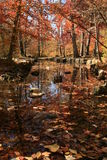 Red creek. A creek with colorful leaves and trees Stock Photography