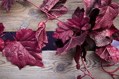 The red Creeper artificial Plant Royalty Free Stock Image