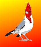 Red crested cardinal. Fire Red crested cardinal standing Stock Photography