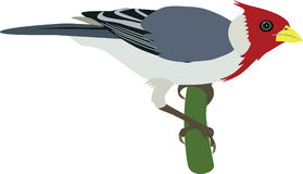 Red-crested Cardinal vector. On a tree stock illustration