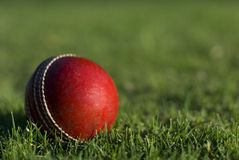 Red Cricket Ball On Grass Stock Photography