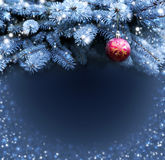 Red Cristmas ball and blue pine branches. Royalty Free Stock Image