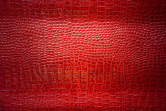 Red croccodile Leather background and texture.  Stock Image