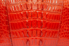 Red crocodile Leather background texture.  Royalty Free Stock Photography