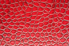 Red crocodile leather Royalty Free Stock Photography
