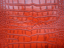 Red crocodile skin texture Royalty Free Stock Photo