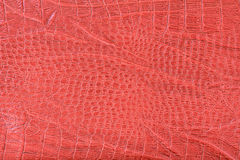 Red crocodile skin textured Stock Photography