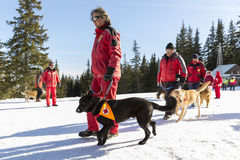 Red cross saviors with their dogs Royalty Free Stock Photography