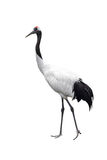 Red-crowned crane Stock Photo