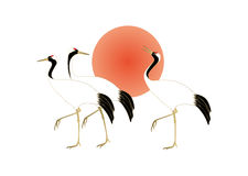 Red-crowned cranes and the Sun Stock Images