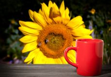 Red cup on a blurred background of a sunflower stock image